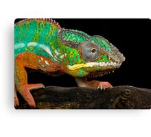 The colourful chameleon Canvas Print