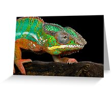 The colourful chameleon Greeting Card