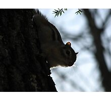 Furry Forest Friend Photographic Print