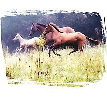 Galloping Horses Photography Photographic Print