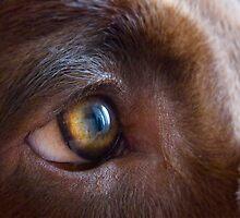 Eye of the.....dog... by Luke Stevens
