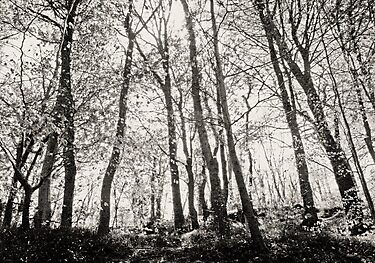 Clyne Woods by Phill Jenkins