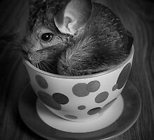 Chinchilla Tea Cup  by Amber  Lavallee