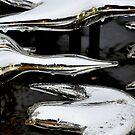 Glass birds by DiamondCactus