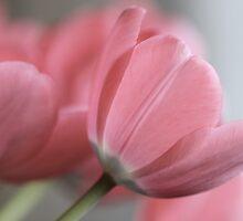 softness by Joanne Hamblin