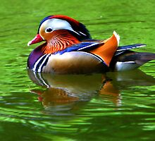 Wonderful Waterfowl by Lisa G. Putman