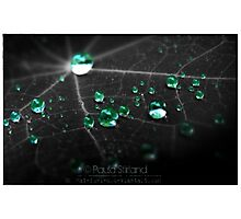 Collecting Emeralds Photographic Print