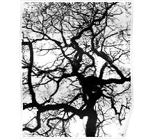 Oak Poster