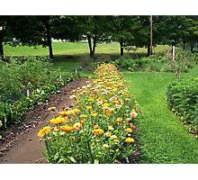 Flower Garden Path Photographic Print