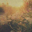 Sunny Sunset by JurrPhotography