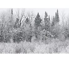 Wintry Roadside Photographic Print