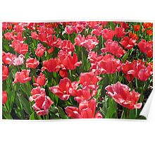 Pretty Flowers Poster