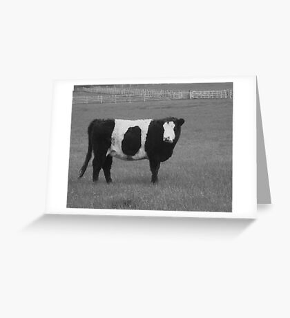 belted galloway Greeting Card