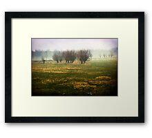 misty willow field Framed Print