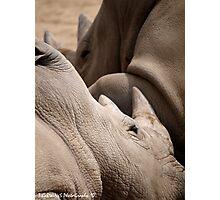 Rhino Love Photographic Print