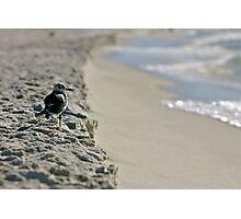 Seagull Solitude Photographic Print