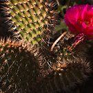 Flowering Cactus by Leslie  Hagen