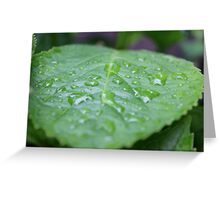 Rain Drops Greeting Card