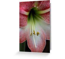 Variegated Pink Greeting Card