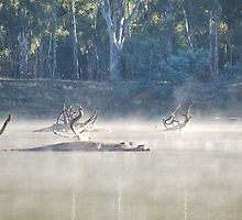 Misty Mornings On The Murray by MissyD