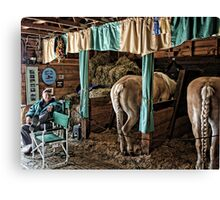 Prize Winning Draft Horses - Fryeburg Fair Canvas Print