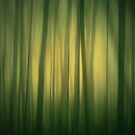 The Forest is Green by JOSEPHMAZZUCCO