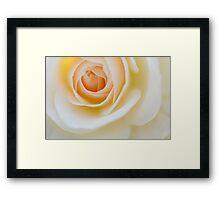 Rose in Soft Light  Framed Print