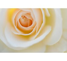 Rose in Soft Light  Photographic Print