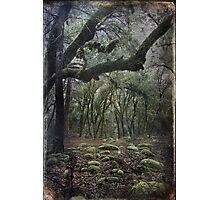 Where The Wild Hearts Roam Photographic Print