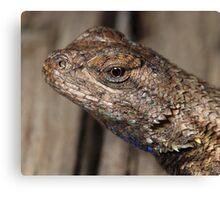Close-up of Lizard head Canvas Print