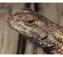 Close-up of Lizard head Photographic Print