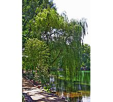 A Walk by the Willows Photographic Print