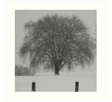 Weeping Willow in Snow  Art Print