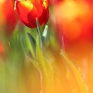 Tulip by BryanLee