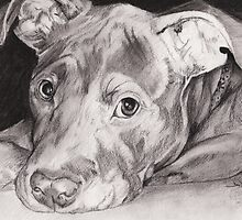 """""""Thai"""" the Red-nose American Pitbull Terrier by David T. Mitchell"""