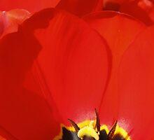 Crumpled Petals by wiggyofipswich