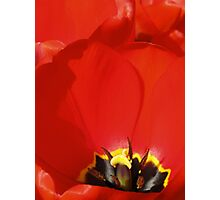 Crumpled Petals Photographic Print