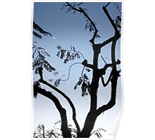 Moon Tree 0872 Poster