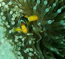 Nemo by chinthis