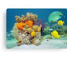 Colors of marine life underwater Canvas Print