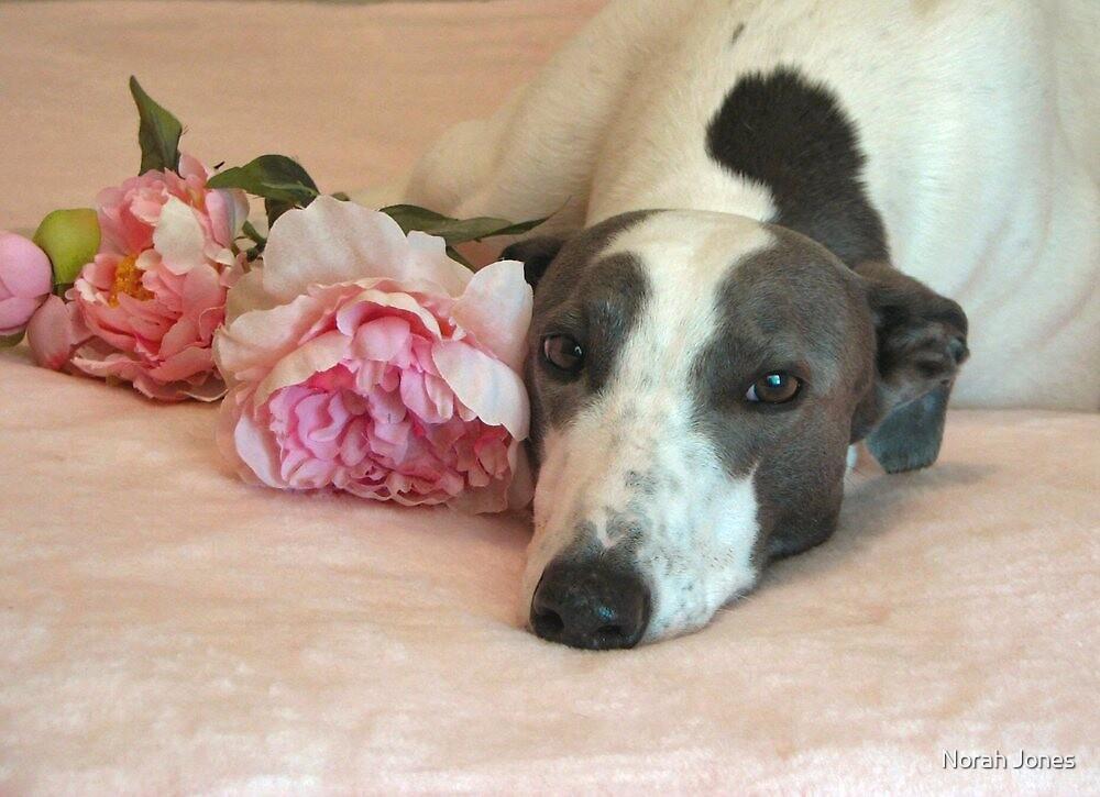 My happy, retired Greyhound, Jackson.  by Norah Jones