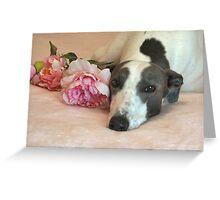 My happy, retired Greyhound, Jackson.  Greeting Card