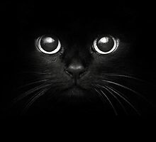 Black cat's eyes by luckynewbie