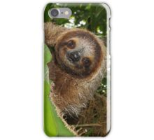 Cute three-toed sloth in a jungle tree wild animal iPhone Case/Skin