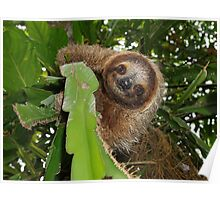 Cute three-toed sloth in a jungle tree wild animal Poster