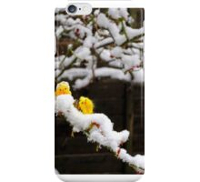 Chicks on Snowy Branch iPhone Case/Skin