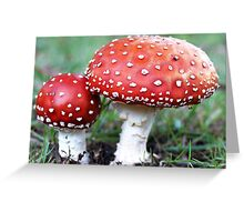Fly Agaric fungi in my garden - April 30, 2010 - Gippsland, Vic Greeting Card