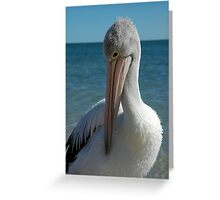 A Shy Pelican Greeting Card