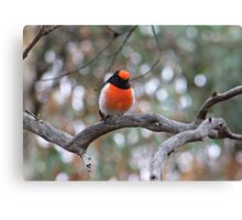 Robin in May Canvas Print