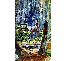 Deer in the dell  Photographic Print